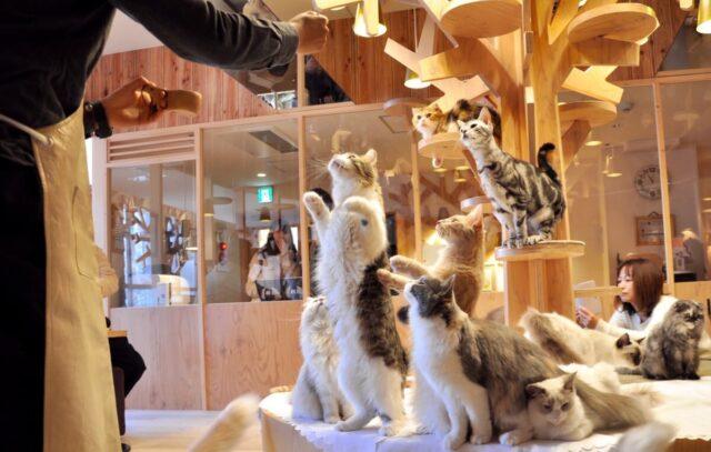 猫カフェ 評判 きつい 大変 シフト 時給 口コミ